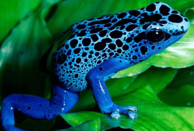 The Blue Frog in the EEG | Sapien Labs | Neuroscience